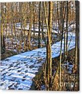 Winter Woods Walk Acrylic Print