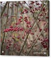 Winterberries Squared Acrylic Print
