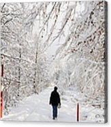 Winterly Forest With Snow Covered Trees Acrylic Print by Matthias Hauser