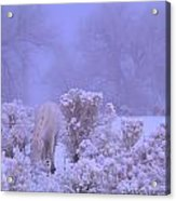 Winter's Blanket Of Snow  Acrylic Print by Jeanne  Bencich-Nations