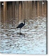 Winter's Blue Heron Acrylic Print
