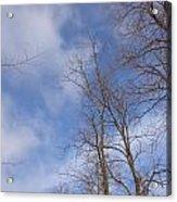 Winter's Blue Sky Acrylic Print