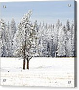 Winter's Coat Acrylic Print by Dee Cresswell
