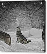Winters Eve Howling Acrylic Print