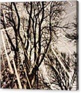 Winters Eve Acrylic Print