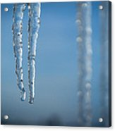 Winter's Fangs Acrylic Print