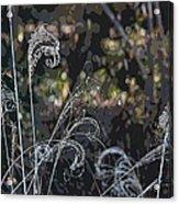 Winters Flourishes  Acrylic Print