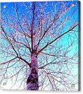 Winters Freeze Acrylic Print