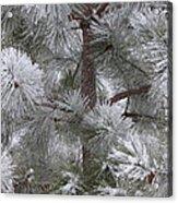 Winter's Gift Acrylic Print