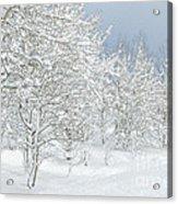 Winter's Glory - Grand Tetons Acrylic Print