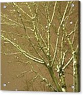 Winter's Golden Tree And Suspended Snow Acrylic Print