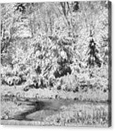 Winter's Grip Acrylic Print
