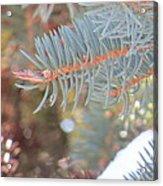 Winters Look Acrylic Print