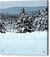 Winter's Love  Acrylic Print