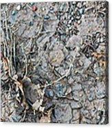 Winter's Mud Acrylic Print