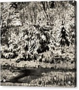 Winter's Sepia Grip Acrylic Print