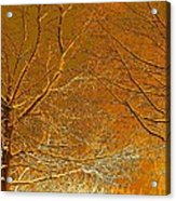 Winters Touch 2 Acrylic Print