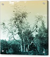 Winter's Tree Acrylic Print