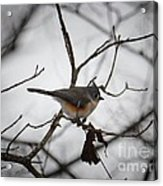 Winter's Tufted Titmouse Acrylic Print
