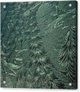 Winter's Work 3 Acrylic Print