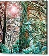 Wintersun Acrylic Print