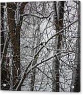 Wintery Day Acrylic Print