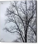 Wintry Tree Acrylic Print