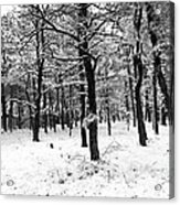 Wintry Woods Acrylic Print