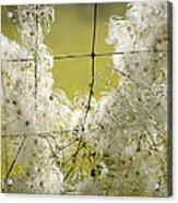 Wire Weed 14432 Acrylic Print