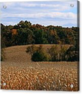 Wisconsin Fields In Late Summer Acrylic Print