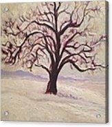 Wisconsin Winter Acrylic Print
