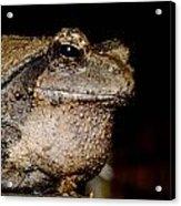 Wise Old Frog Acrylic Print