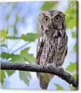 Wise Old Owl Acrylic Print