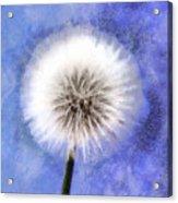 Wish A Little Wish Acrylic Print