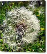 Wish I May Acrylic Print