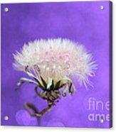 Wish Of Love Acrylic Print