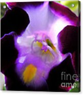 Wishbone Flower Acrylic Print