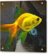 Wishful Thinking Cat Fish Art By Sharon Cummings Acrylic Print by William Patrick