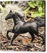 Wishing Horse Acrylic Print