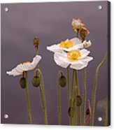 Wispy White Floral Acrylic Print