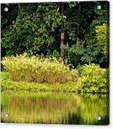 Wispy Wild Grass Reflections Acrylic Print