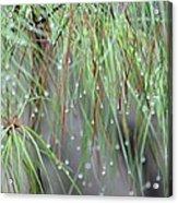 Wispy Winter Raindrops Acrylic Print