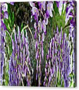 Wisteria Abstract Acrylic Print