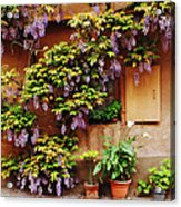 Wisteria On Home In Zellenberg 4 Acrylic Print