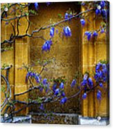 Wisteria Wall Acrylic Print