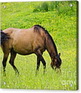 With A Swoosh Of The Tail Acrylic Print