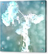 Withering Away - Aqua Sparkle Acrylic Print