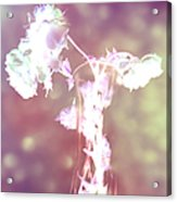 Withering Away - Magenta Sparkle Acrylic Print