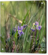 Without Rustling                  Acrylic Print