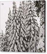 Wnter Snow At Shaver Lake Acrylic Print